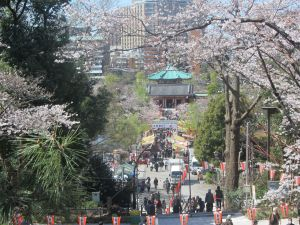 Sakura at Ueno Park, Tokyo in Late March by John D'Amico, EAS Major, Class of '15
